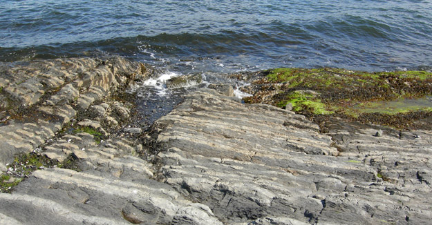 Middle Ordovician shales and limestones on the western shoreline of the Oslo Fjord.