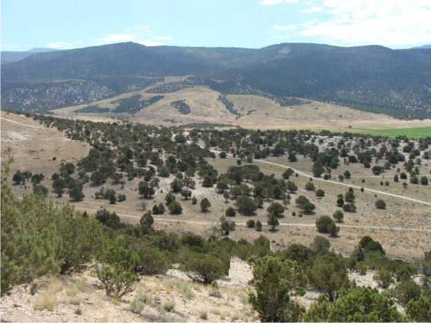 From the top of Black Hill, you can easily see the large landslide to the E.  The landslide originated toward the top of the Wasatch Plateau and spread into the adjacent Cane Valley.