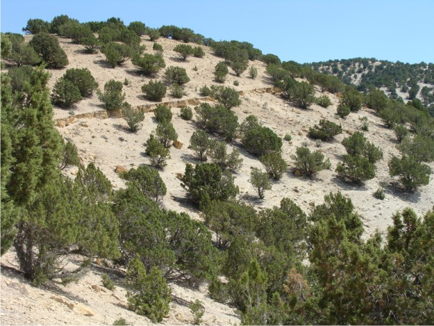 Walking the tuff bed is not difficult at Black Hill, because the tuff was well exposed.  In this photo the resistant tuff bed is exposed along the Green River slopewash.