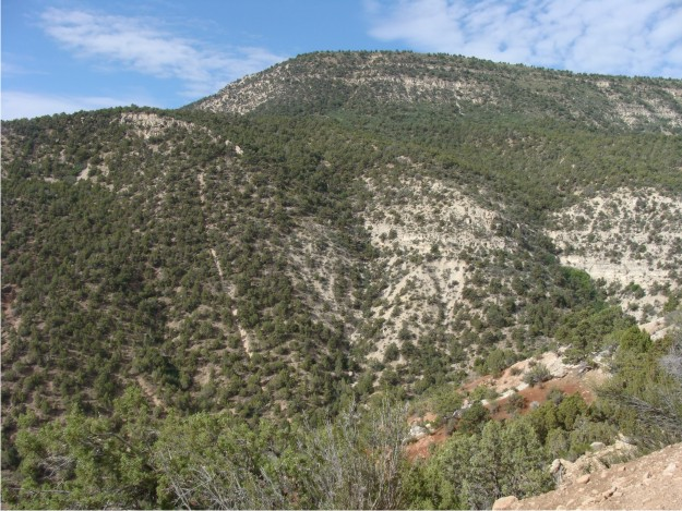 Here is a view of the north-facing slope in Dry Canyon.  If you look closely, you can see the Flagstaff Limestone outlining the presence of a monocline in the area.