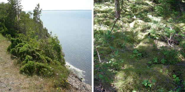 The Panga Cliff (left) and deep forest floor moss on a trail along its top (right).