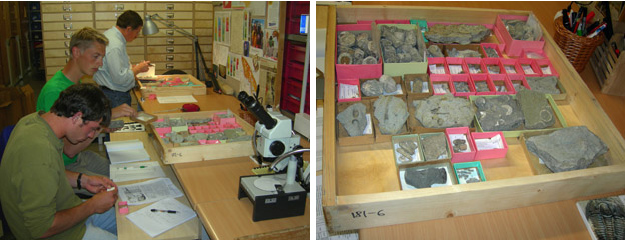 The Estonia Geology Research crew examining specimens in the Institute of Geology collections (left); a typical museum drawer (right).