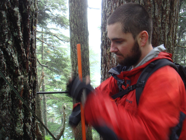 Colin uses the increment borer to core another mountain hemlock.