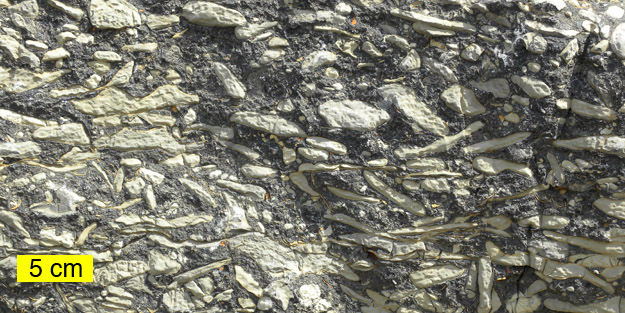 This is an odd breccia at the base of the Burgess Shale. The white parts are limestone fragments and the black is calcite. This may be an indication of carbonate hardgrounds -- features I study.