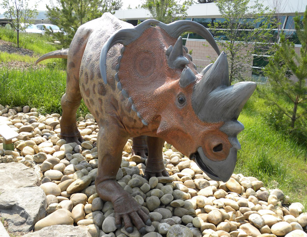The dinosaur reconstructions inside and outside the museum are very well done.  This is a Cretaceous pachyrhinosaur with fearsome ornamentation.
