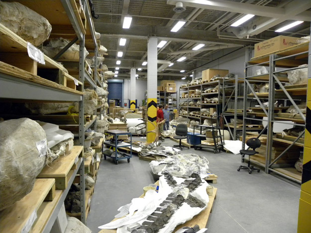 The main collections storeroom is filled with paleontological treasures.