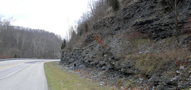 Outcrop of the upper Fairview Formation (Upper Ordovician) on Kentucky Route 11 near Maysville, Kentucky (N38.61243°, W83.75575°).