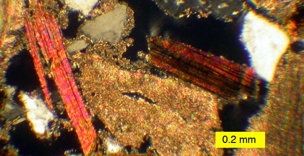 A beautiful view of a modern hardground in thin-section.  The platy orange, pinkish and brown grains are the mineral biotite (a mica), the gray and white angular grains are quartz, and the tan irregular grains are recrystallized shells and cements.  Sampled dredged from about 650 meters in the Strait of Messina between the Italian mainland and Sicily.  Collected by Agostina Vertino.