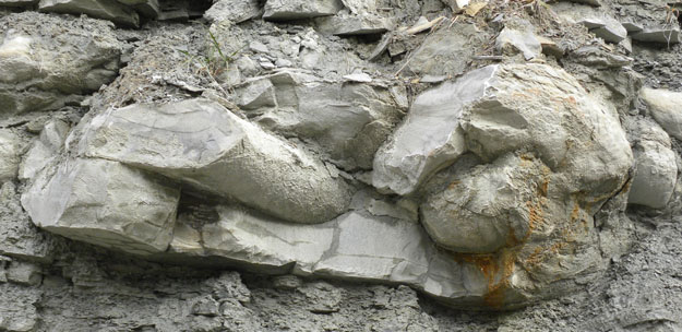 Closer view of a seismite in the Kentucky Route 11 outcrop.  I couldn't reach this high to place my hammer for scale.  The structure is about a meter thick.
