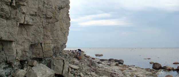 Figure 1. Jaani Formation at Panga Cliff, Saaremaa, Estonia.