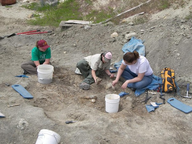 Two summer staff members and myself working on excavating a Camarasaurus at the BS (Beside Sauropod) quarry at the Wyoming Dinosaur Center.