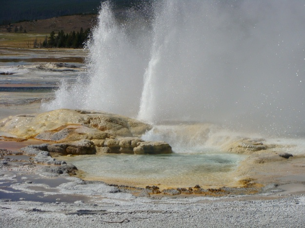 Above is a photo of Spasm Geyser, located in the Lower Geyser Basin.