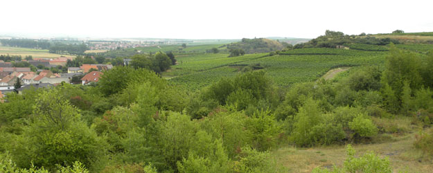 View of the vineyards near Wöllstein, Germany.