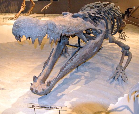 585_Deinosuchus_hatcheri_052913