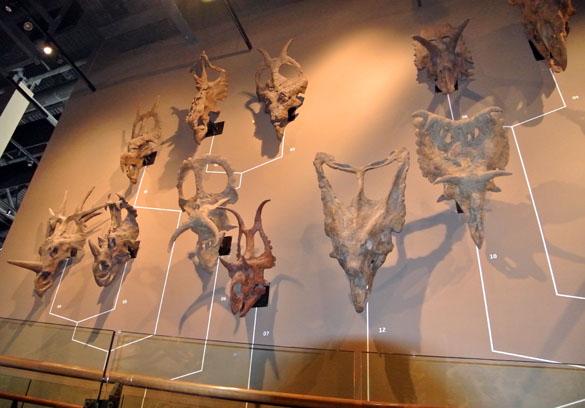 CeratopsianWall052913