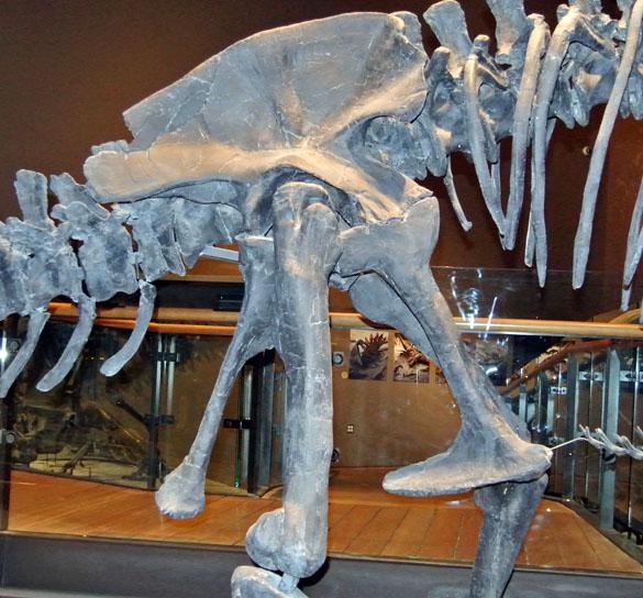 DinoPelvis1_052913