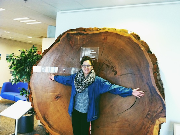 Wow! Look at the size of that tree! Photo Credit: Liz Plascencia