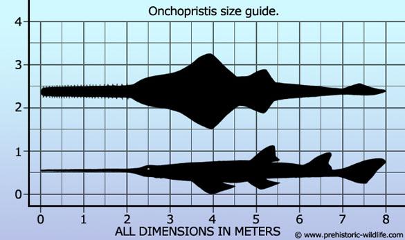 onchopristis_size_guide