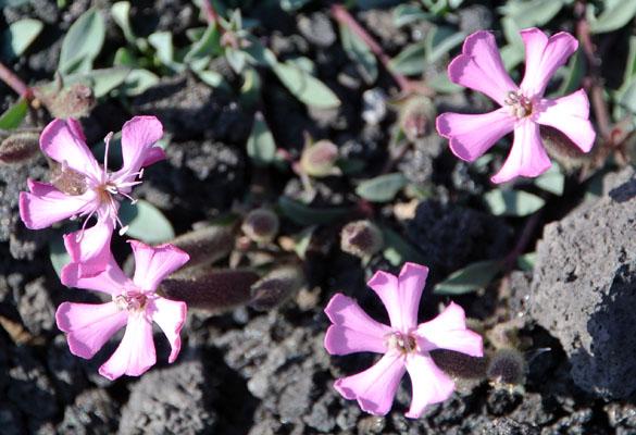 11.PurpleFlowers061613