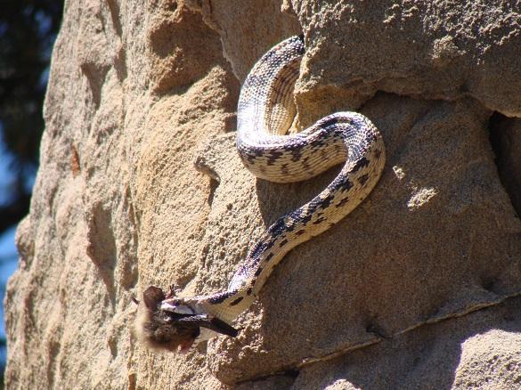 Snake and Bat 1