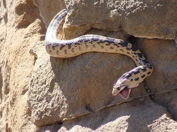 Snake and Bat 2