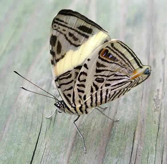 6 Geometric butterfly 021714 585