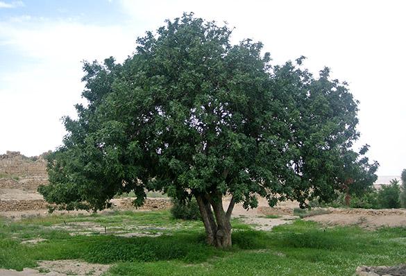 12 Shivta garden 2 041214