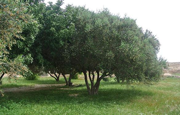 13 Shivta garden 3 041214