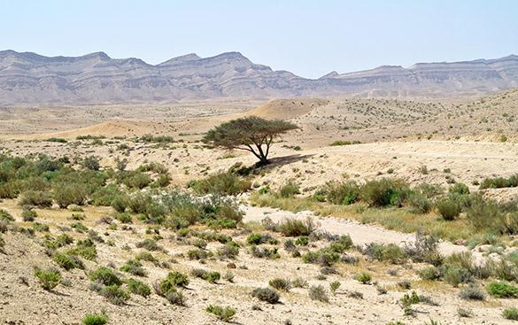 Acacia distant 041714