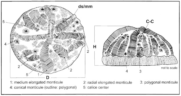 Wooster Geologists Blog Archive Wooster S Fossil Of The Week An