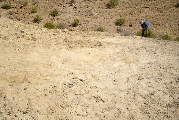 camel bed fossils 041814