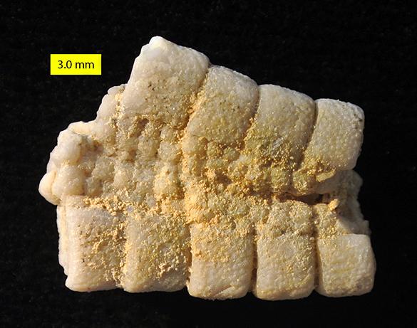 zichor asteroid aboral 585