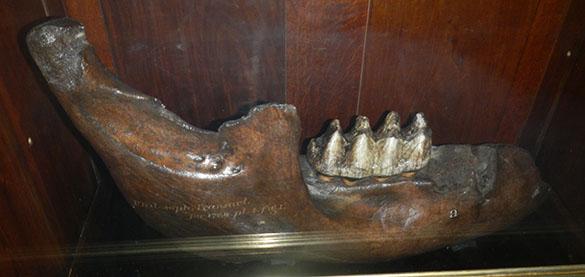 Mastodon BM 062214