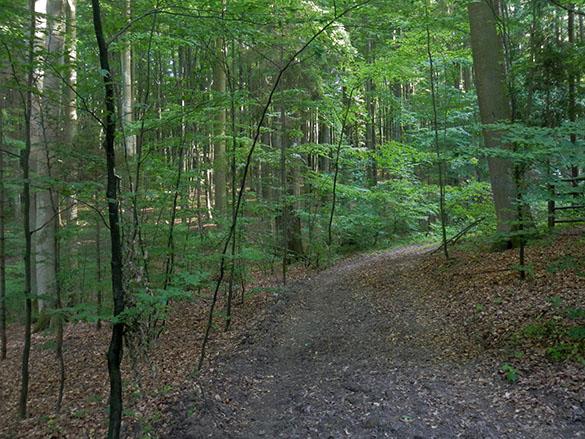 Polish woods 061214
