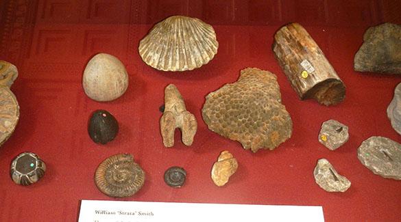 Smith fossils BM 062214