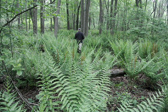 1 Greg with ferns