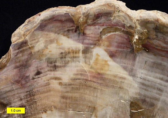 2Petrified wood close 052615 585