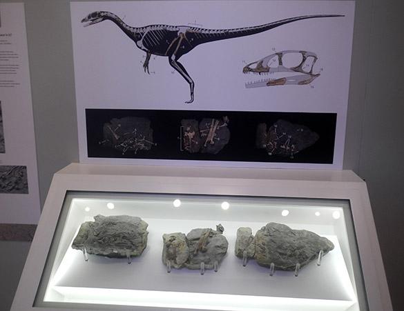 2 Dino display
