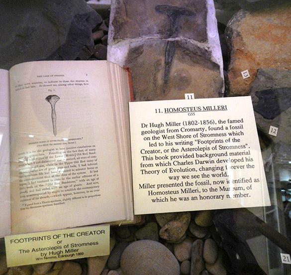 3 Hugh Miller fossil