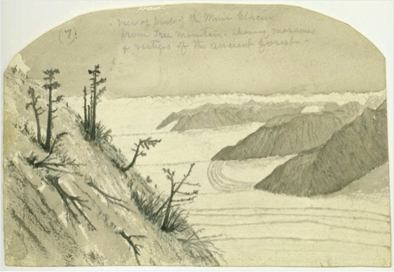 Muir's 1895 journal sketch of Muir Glacier from Tree Mountain.