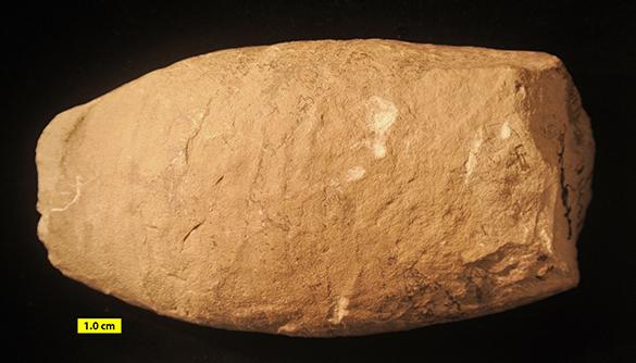 2 Poterioceras calvini Milwaukee Formation Devonian