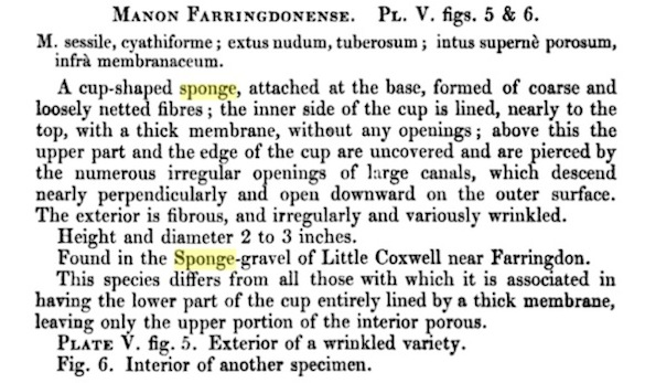 Manon farringdonense description 1854