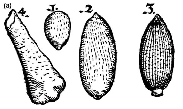 Gesner 1565 figure