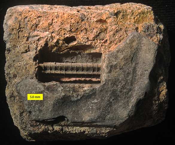 crinoid internal mold 1