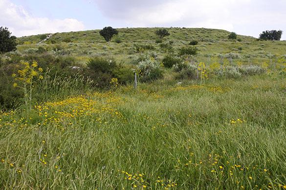 12 Tel Maresha