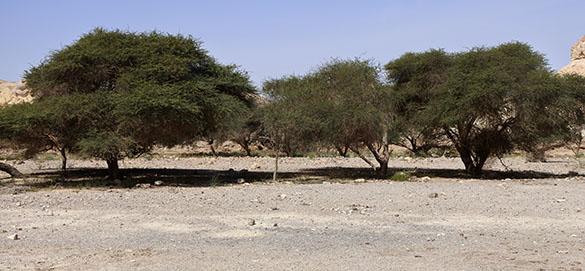 3 Acacia grove Beer Ada