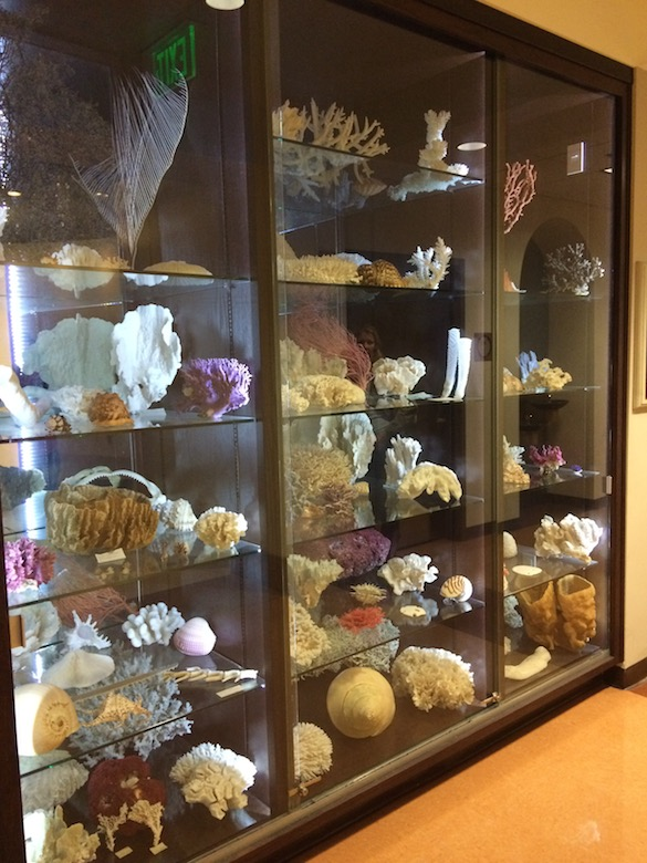 Visitors to the Department of Environmental and Ocean Sciences are greeted with this stunning display of a donated coral collection.