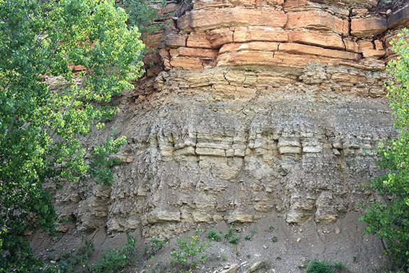 1 Decorah outcrop 073116