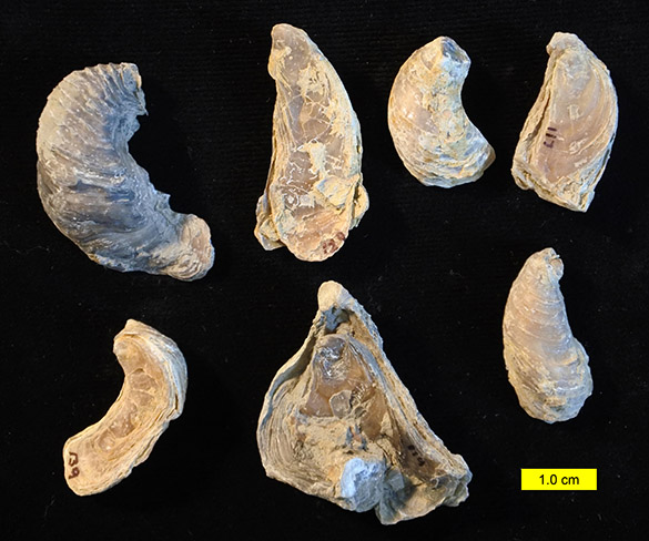Mystery fossils 081916 585