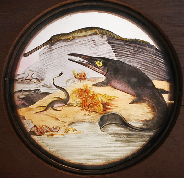 1-teleosaurus-ichthyosaurus-pentacrinites-ammonites-gryphaea